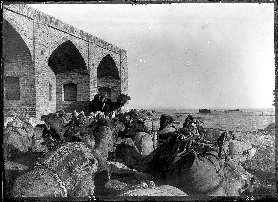 Kameler vid Rabat-gur